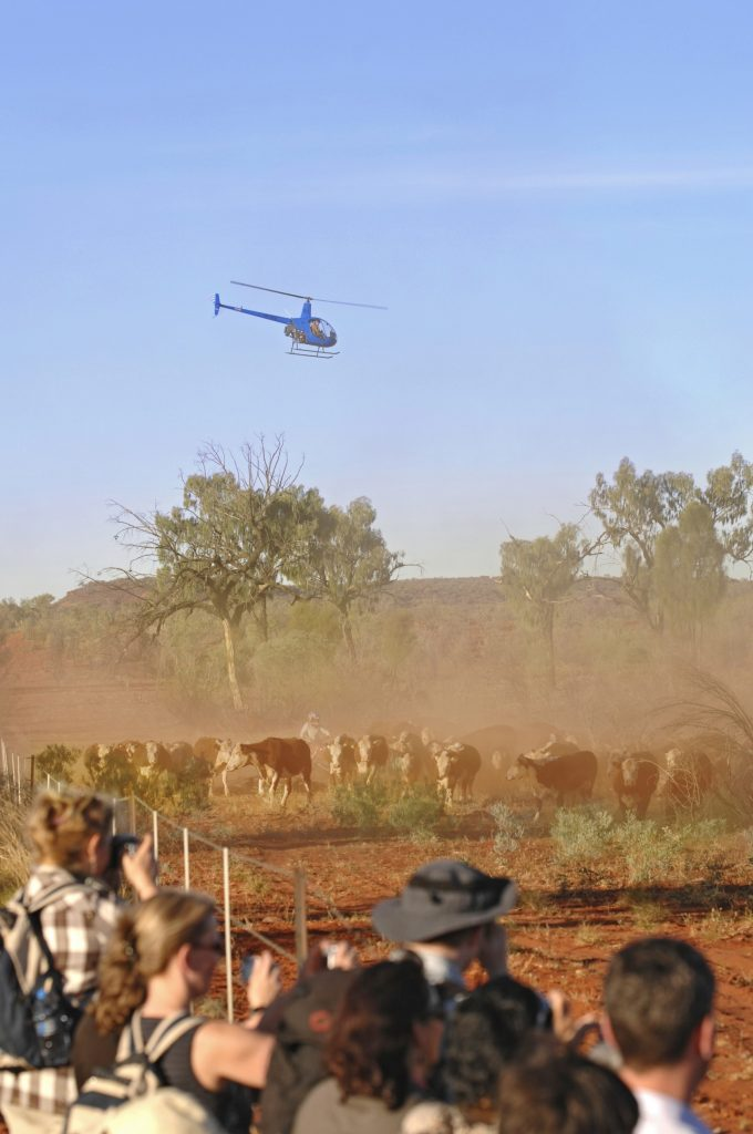 Real Outback Cattle Muster